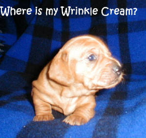 wheresmywrinklecreme.jpg