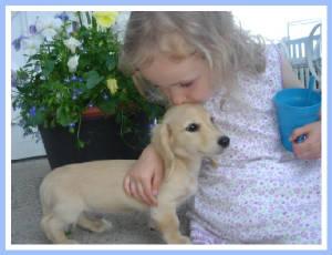 Guardian Kennel, Dachshund puppies miniature Minnesota MN